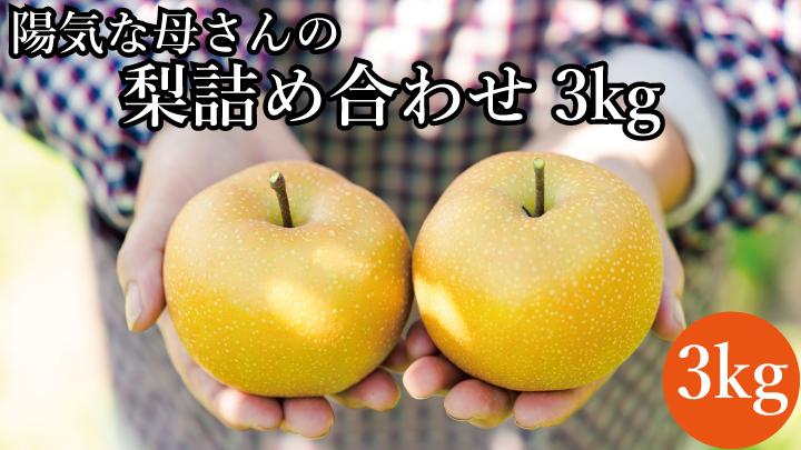 【期間限定・数量限定】陽気な母さんの梨詰め合わせ3kg