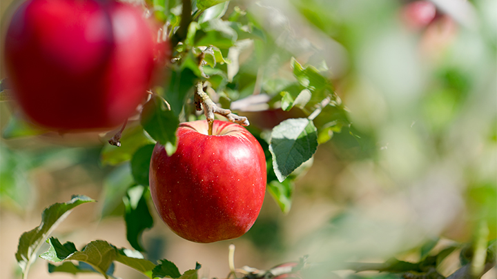 【期間限定・数量限定】季節のりんご詰め合わせセット3kg