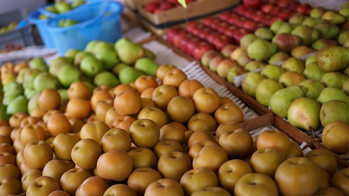 【数量限定】糸屋さんちの「中山なし」と「りんご」の詰め合わせ5kg