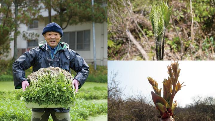 予約受付【天然山菜】春の里山だより3点セット